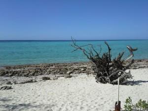 Heron beach 3 20140917_142133_resized