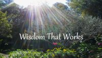 abode-chimp-wisdom-d16d463c-1835-4739-9077-912ae7daf801